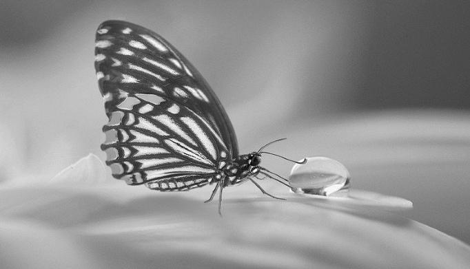 Butterfly Tea Ice Cubes